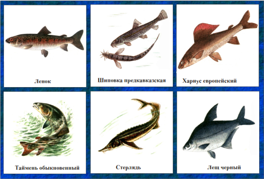 В году длиннорылый морской конек был занесен не только в красную книгу украины, но и в красную книгу мсоп.